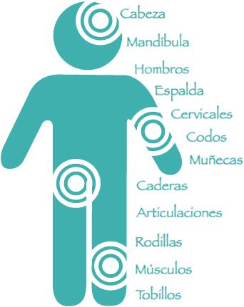 Cabeza, mandíbula, hombros, espalda, cervicales, codos, muñecas, caderas, articulaciones, rodillas, músculos, tobillos